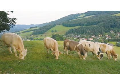 Biorinder vom Biobergbauernhof Reichenau an der Rax